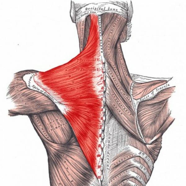 Упражнение на плечи с резинкой для снятия болей и напряжения. Разведение рук в сторону.