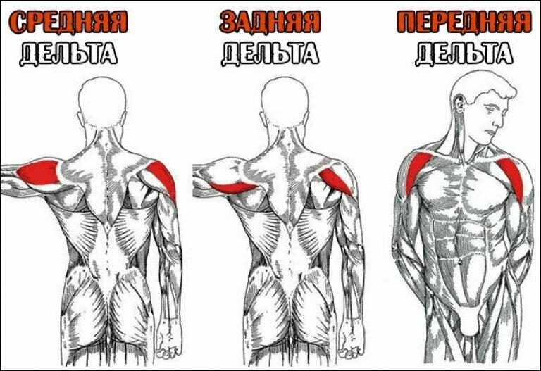 Очень эффективные упражнения для проработки всех дельт плеча.