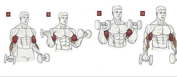 Универсальное упражнение для накачки бицепсов