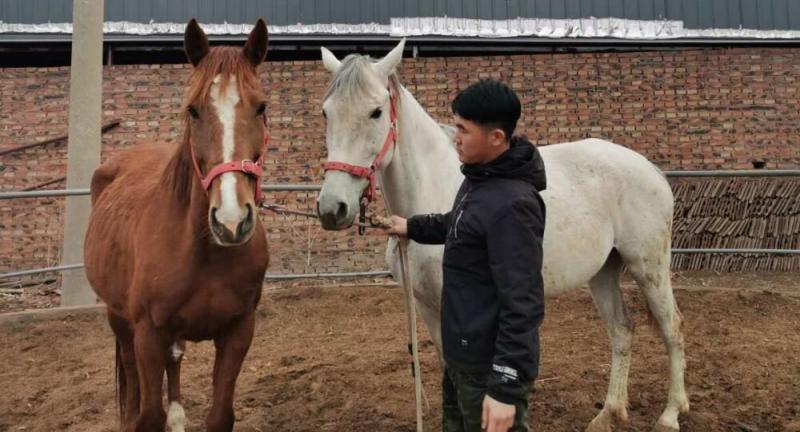 В Китае клонировали лошадь