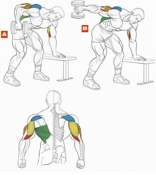 Тренируйся дома: 6 упражнений для прокачки рук с парой гантелей