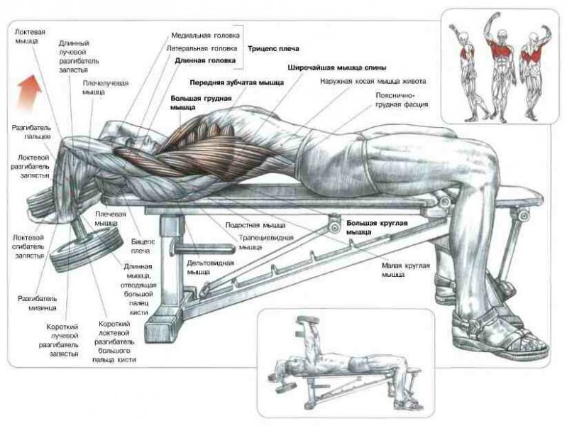 Тренируйся дома: тренировка груди с парой гантелей