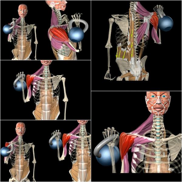 Жим гири от плеча. Какие бывают варианты, техника, анатомия.