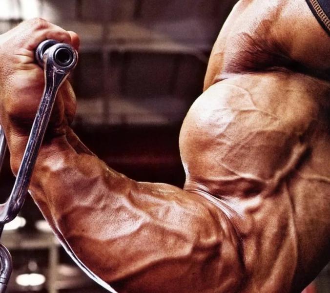 7 легендарных упражнений для увеличения рук