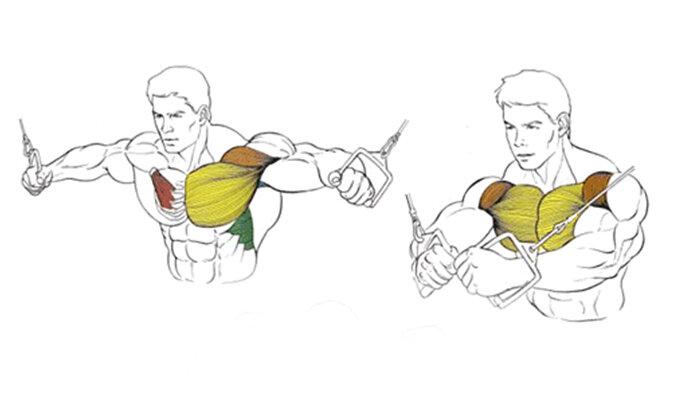 Как прокачать внутреннюю часть грудных мышц?