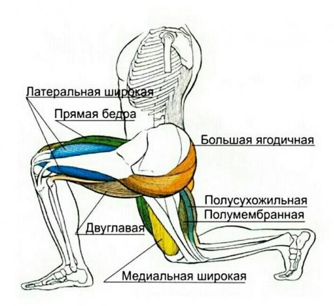 Лучшее упражнение на тренировку ног дома. Программа тренировки ног базовыми выпадами.