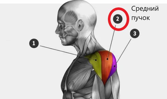 Топ 7 упражнений для плеч (дельтовидных). Рассказывает тренер с 35-летним опытом