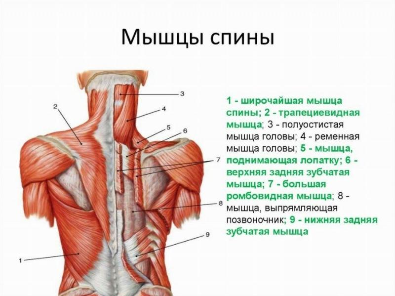 Комплекс простых упражнений для укрепления мышц спины.